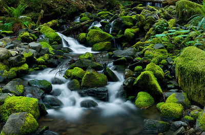 Rain forest stream, Olympic National Park