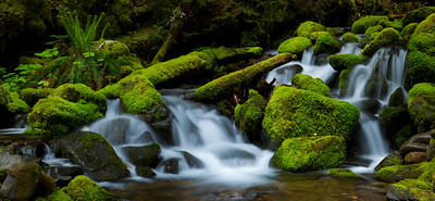 Moss-covered cascade, Olympic National Park