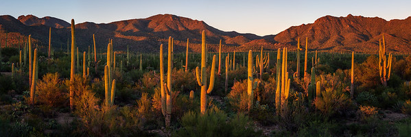 Saguaro National Park West, Tucson, AZ