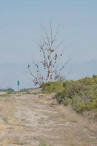 'Shoe Tree', Hinckley, Utah