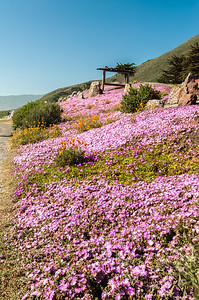 Highway 1 blooming