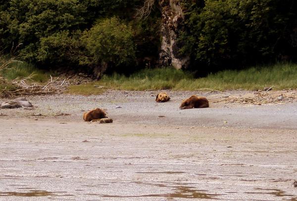 Bears on beach in Katmai National Park, Alaska