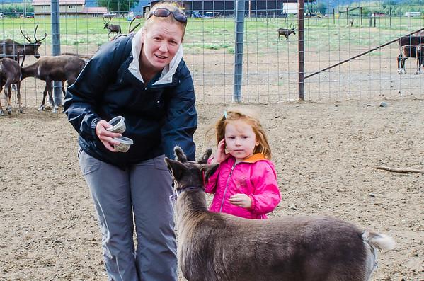 Palmer - Reindeer Farm 2013