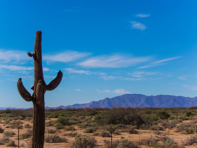 Phoenix - 2013