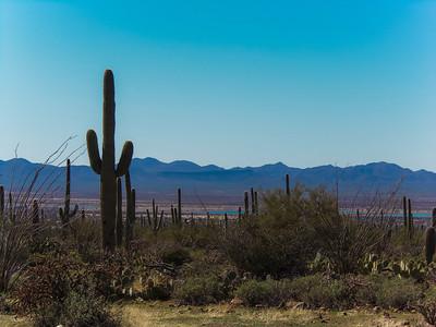 Saguaro NP West - 2013