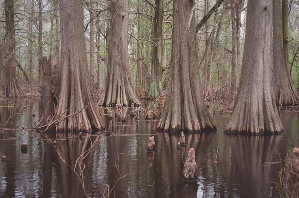 Cypress Preserve Greenville - 105