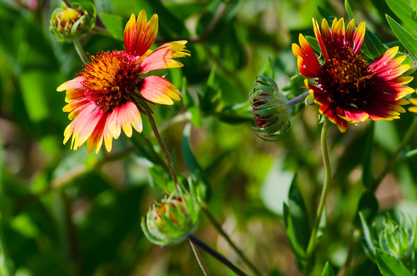 2014 Wildflowers