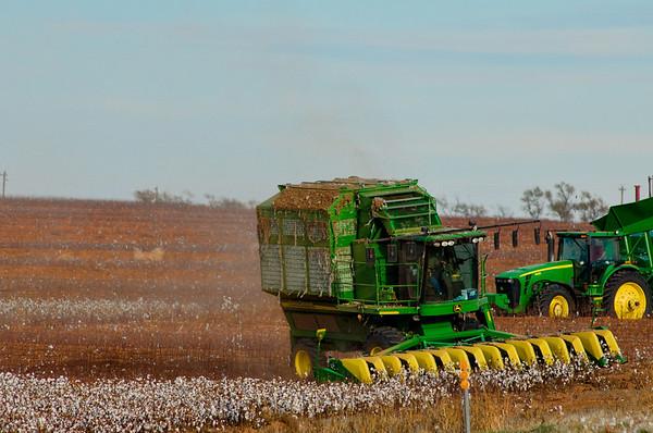 Cotton Harvest 2013