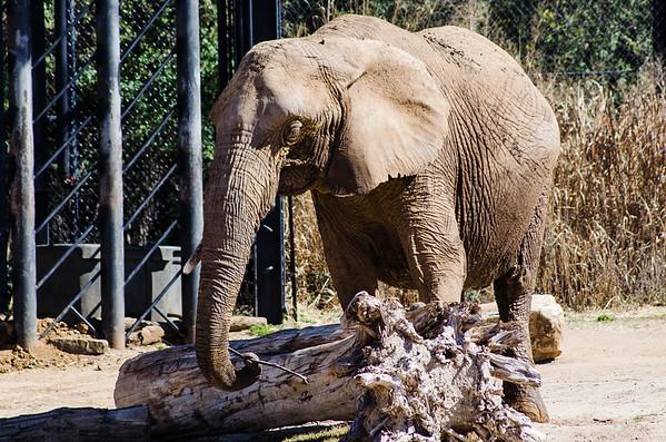 Dallas Zoo - 2015