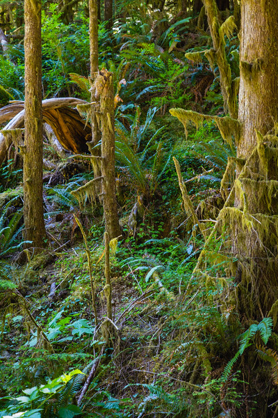 Ferns, Trees and Moss