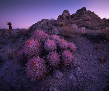 Pink Of The Desert
