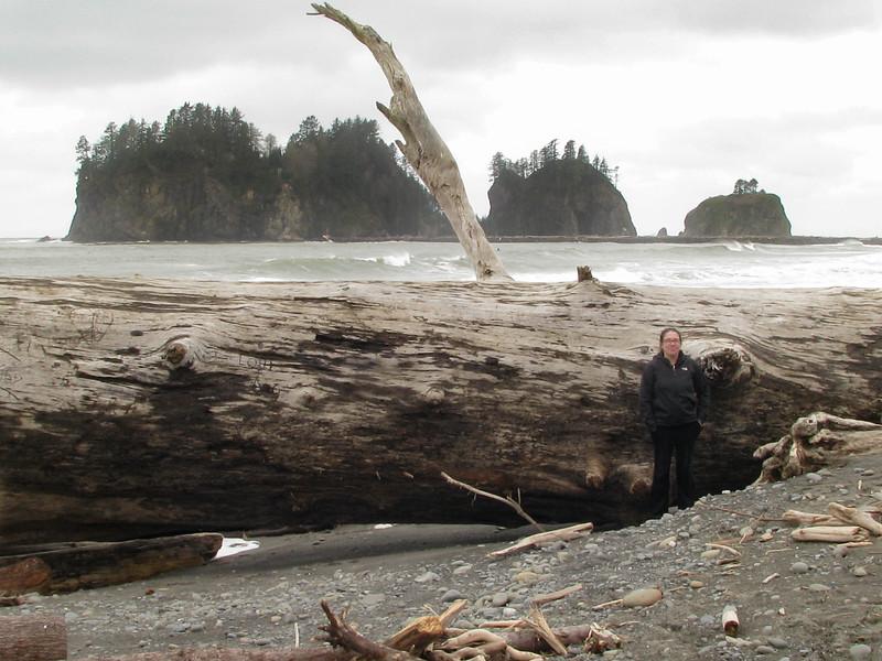 Coast of northwest Washington