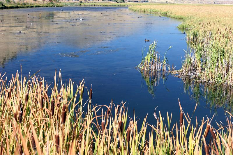 WY-Jackson-Flat Creek Area-2005-09-01-0008