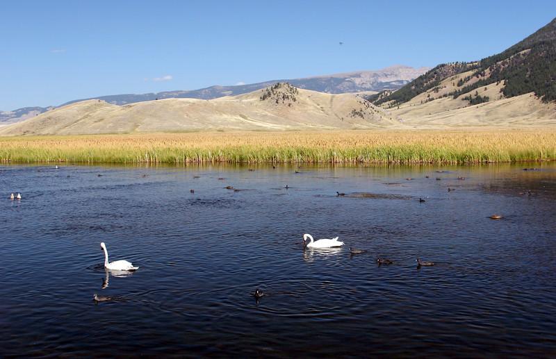 WY-Jackson-Flat Creek Area-2005-09-01-0016