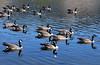 WY-Jackson-Flat Creek Area-2005-09-01-0006
