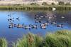 WY-Jackson-Flat Creek Area-2005-09-01-0005