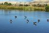 WY-Jackson-Flat Creek Area-2005-09-01-0003