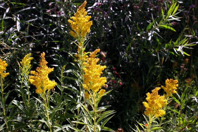 WY-Jackson-Flat Creek Area-2005-09-01-0010