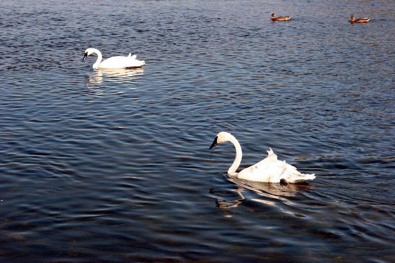WY-Jackson-Flat Creek Area-2005-09-01-0014