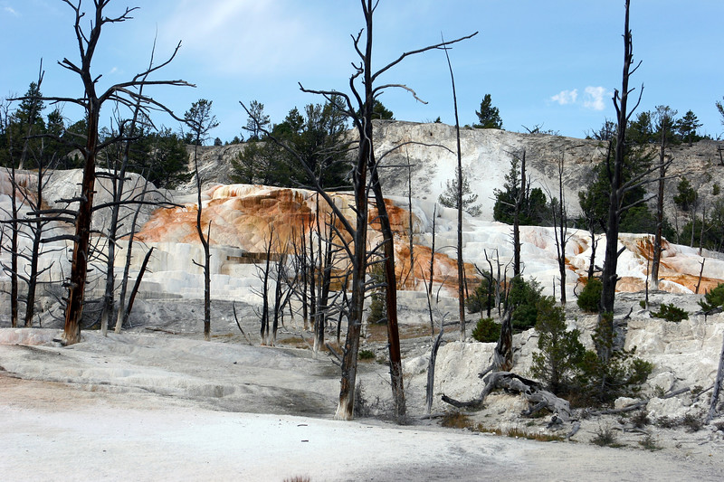 WY-Yellowstone NP-Canary Springs Area-2005-09-03-0023