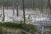 WY-Yellowstone NP-Cistern Spring-2005-09-02-0004