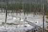 WY-Yellowstone NP-Cistern Spring-2005-09-02-0002