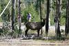 WY-Yellowstone NP-Elk-2005-09-02-0003