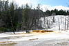WY-Yellowstone NP-Canary Springs Area-2005-09-03-0025