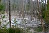 WY-Yellowstone NP-Cistern Spring-2005-09-02-0003