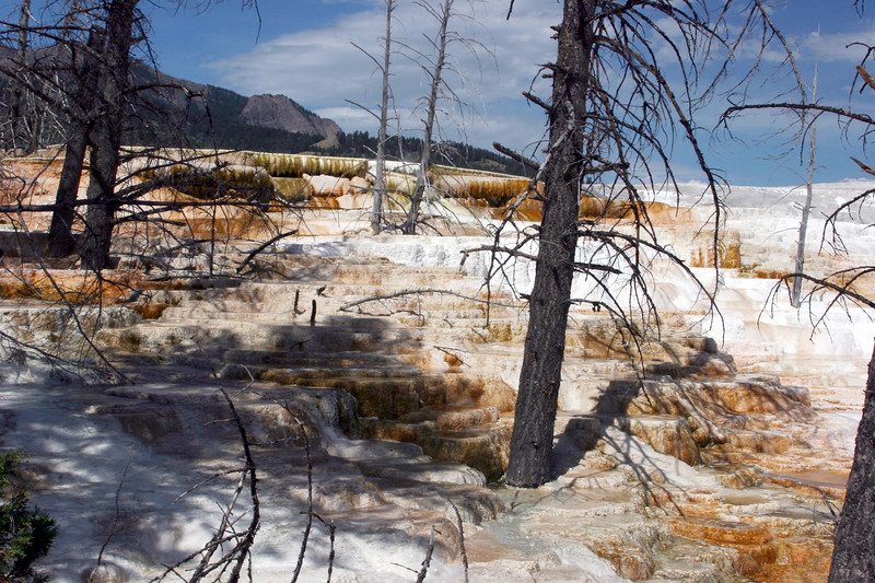WY-Yellowstone NP-Canary Springs Area-2005-09-03-0013