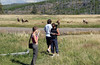WY-Yellowstone NP-Elk-2005-09-02-0008