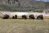 WY-Yellowstone NP-Bison-2005-09-03-0002