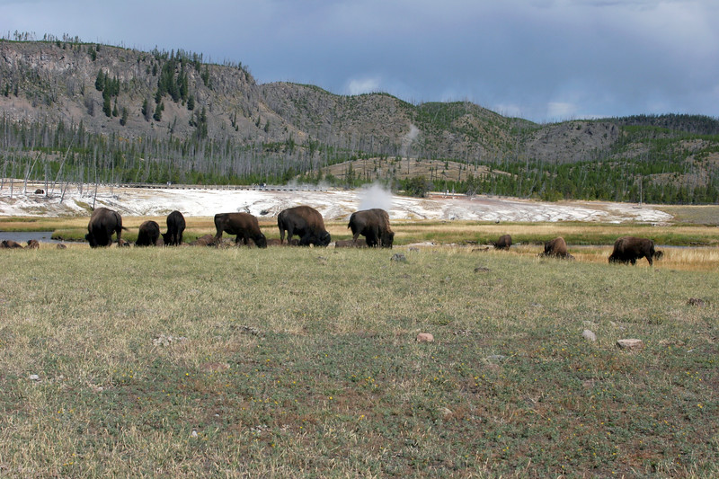 WY-Yellowstone NP-Bison-2005-09-03-0001