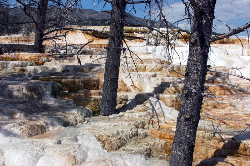 WY-Yellowstone NP-Canary Springs Area-2005-09-03-0014