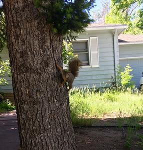 Definitely squirrel!!!