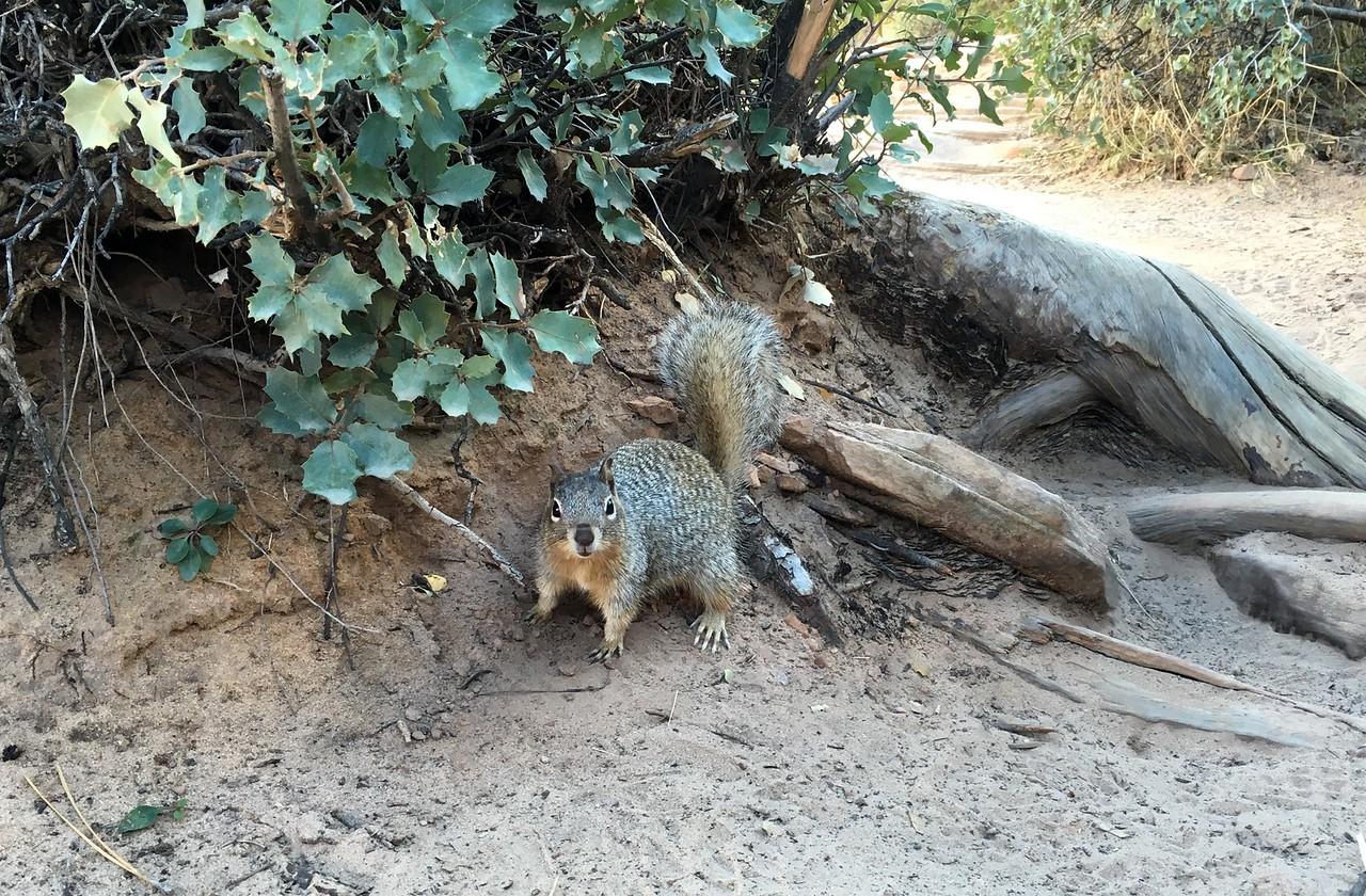 Squirrel noticing food
