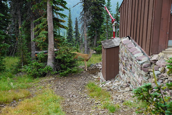 Deer hanging out by the toilet. Do not feed!