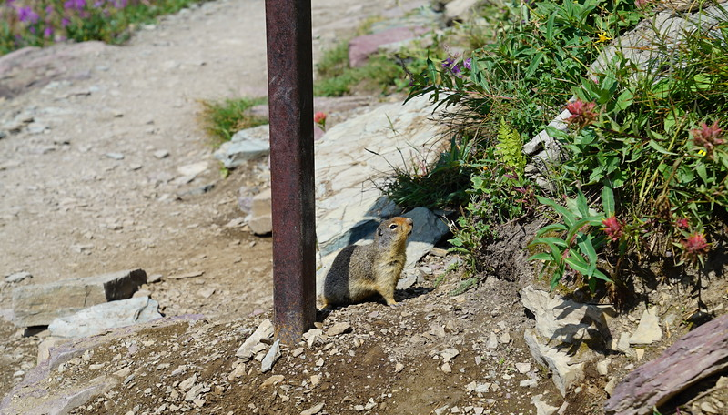 The ground squirrel waited for us to bring food.