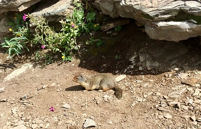 Ground squirrels know we have food
