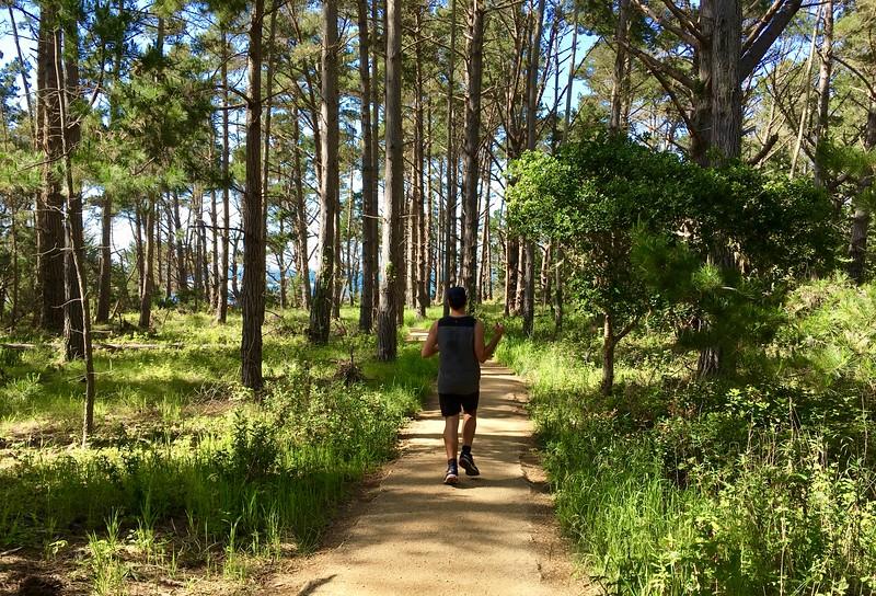 Enjoying our jog among the pines