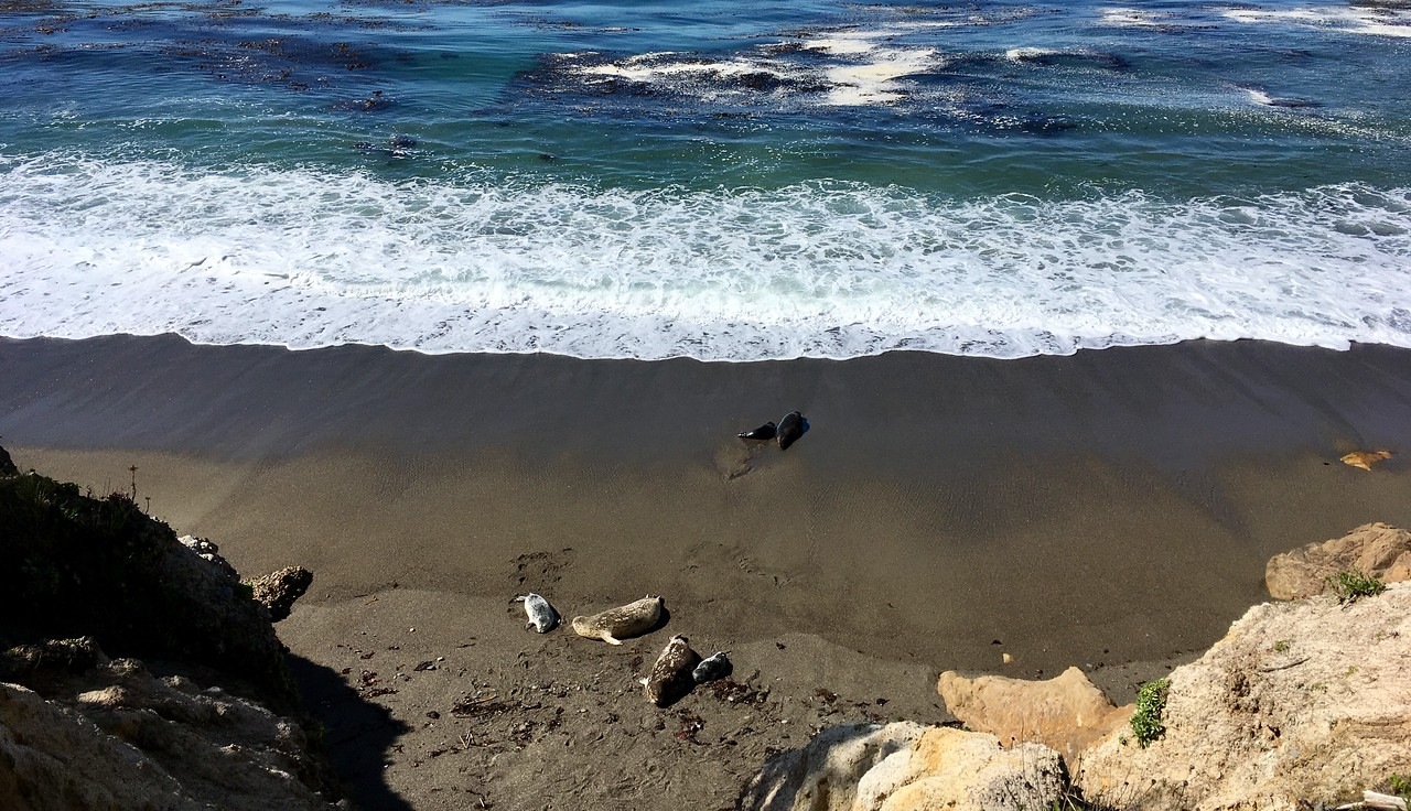 Seals chilling at Whaler's Cove