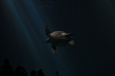 Turtles are so majestic in water... O.o
