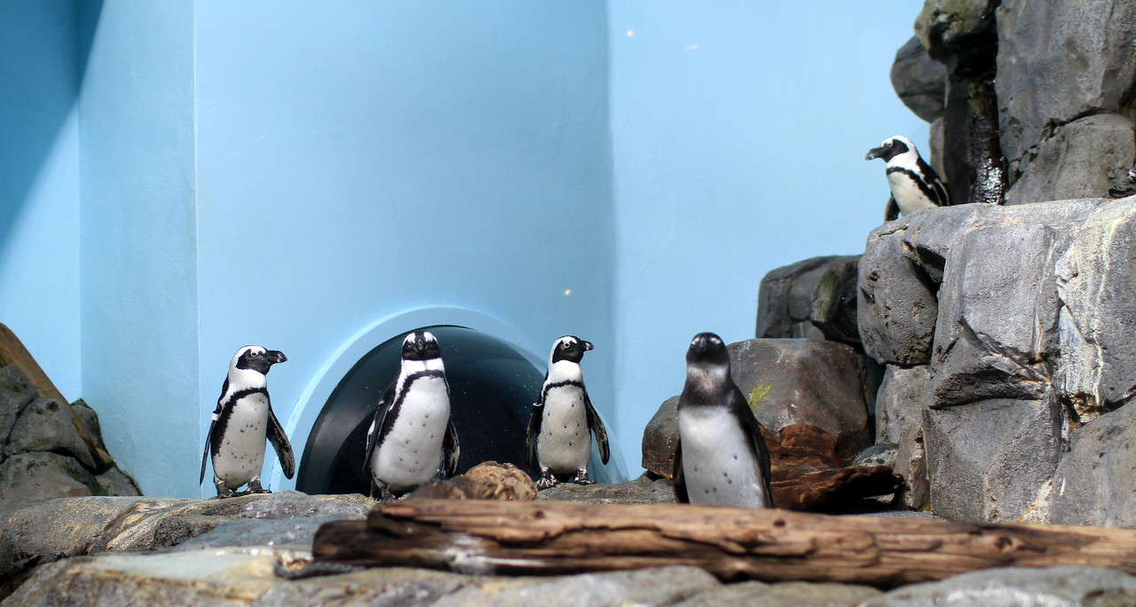 Penguins posing