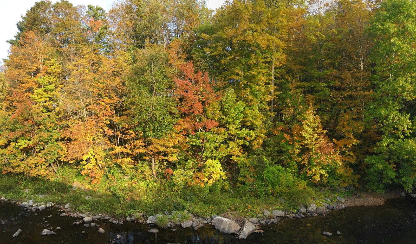 Autumn in full swing