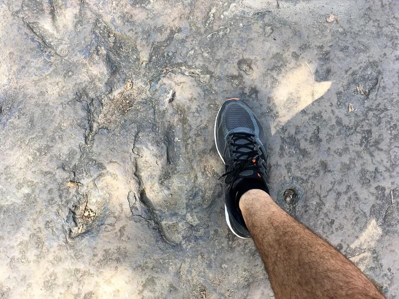 Dinosaur's footprint vs US size 16