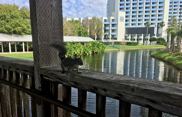 Looks like this squirrel met an alligator at some point