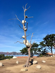 New art installation in Fort Mason park