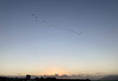 Pelicans formation