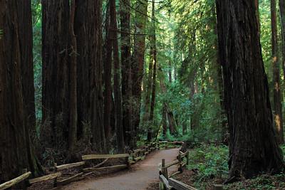 Walk in the woods...