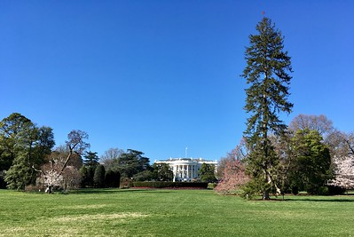 The White House. Still there...